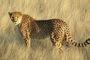 Voyage en Namibie – Informations touristiques