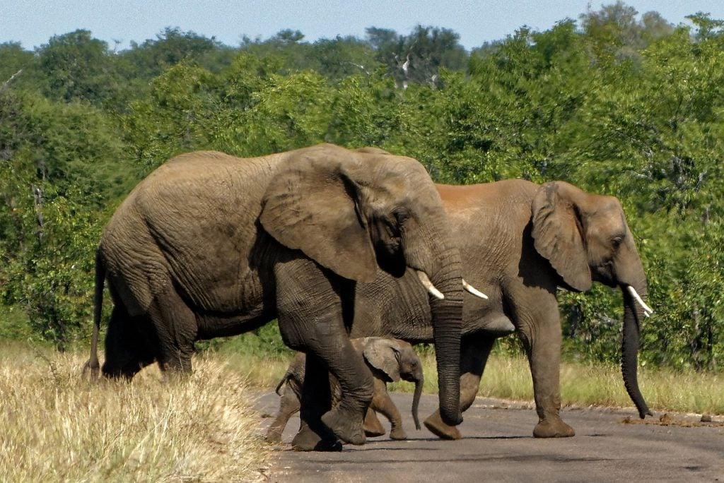 Parc Kruger Afrique du Sud Opodo