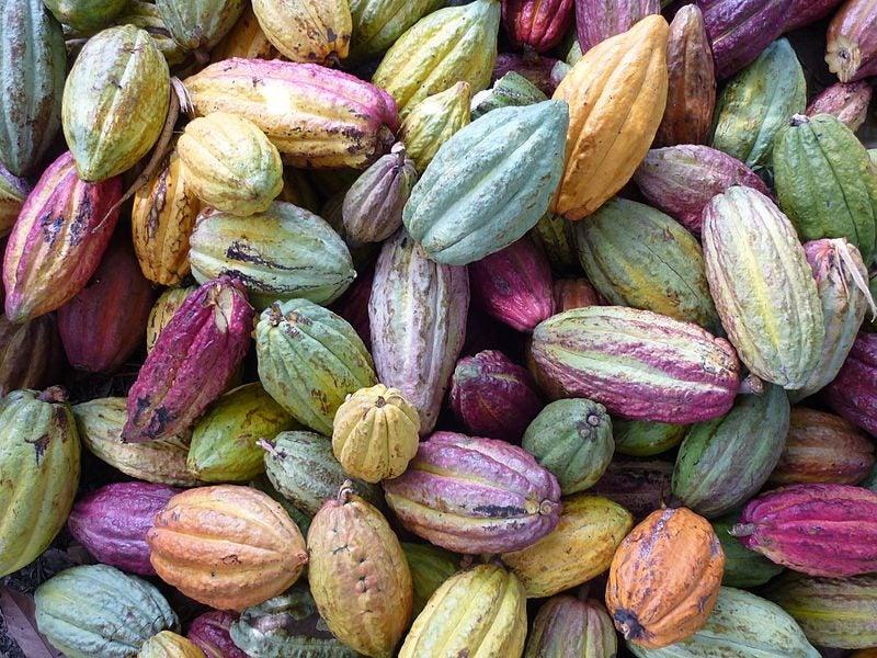 cacao Madagascar - blog Opodo