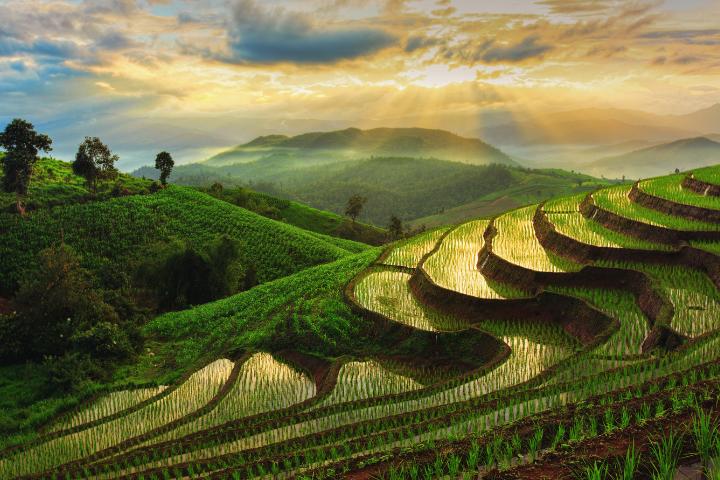 Rizière en terrasses - Chiang Mai - Thaïlande