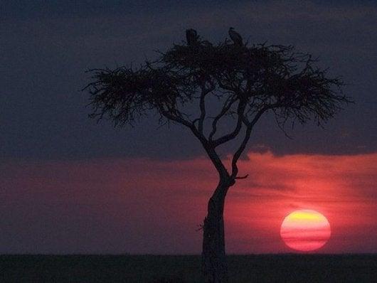 masai-mara-1bc71