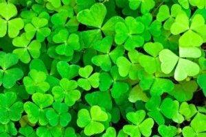 7 anecdotes à connaître sur la Saint-Patrick