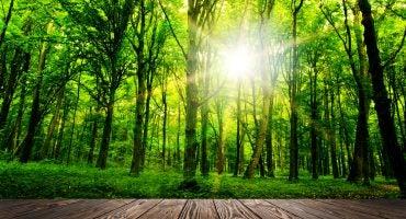 Etes-vous un voyageur eco friendly ?