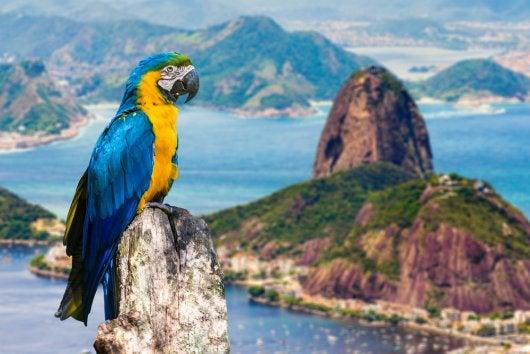 Rio – Les choses à faire ou à ne pas faire