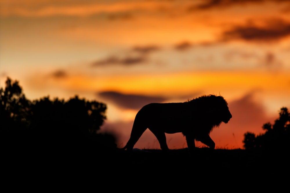 reserve masai mara matin - blog opodo