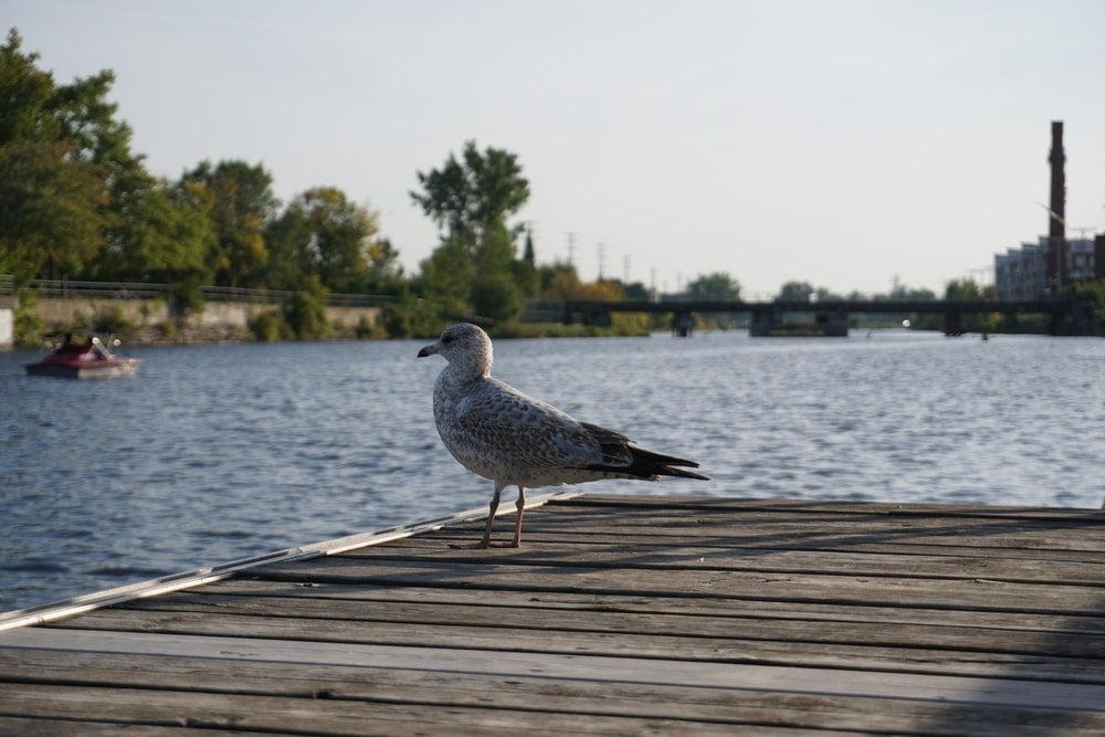 Canal Lachine Montreal - Blog Opodo