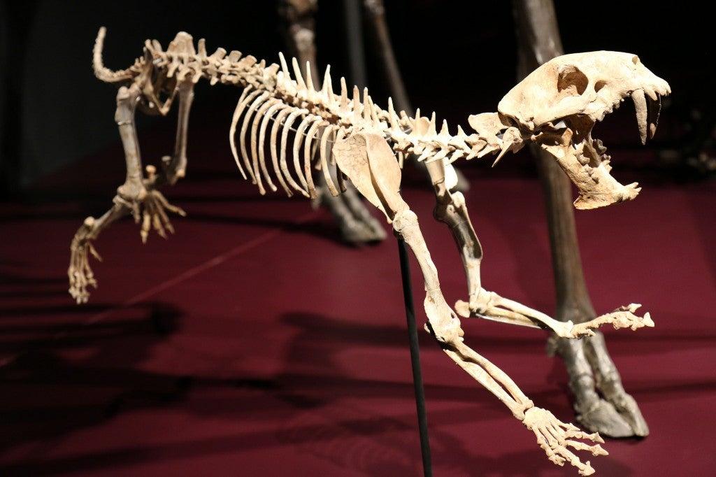 Squelette au musée des confluences de Lyon