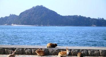 3 îles japonaises envahies par les animaux!