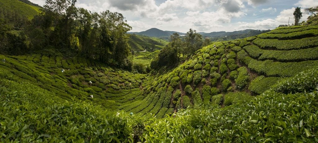Cameron Highlands - blog Opodo