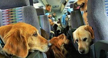 FlyingDogs, le nouveau service de voyage pour chiens
