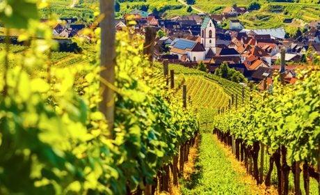 wine-holidays-trend