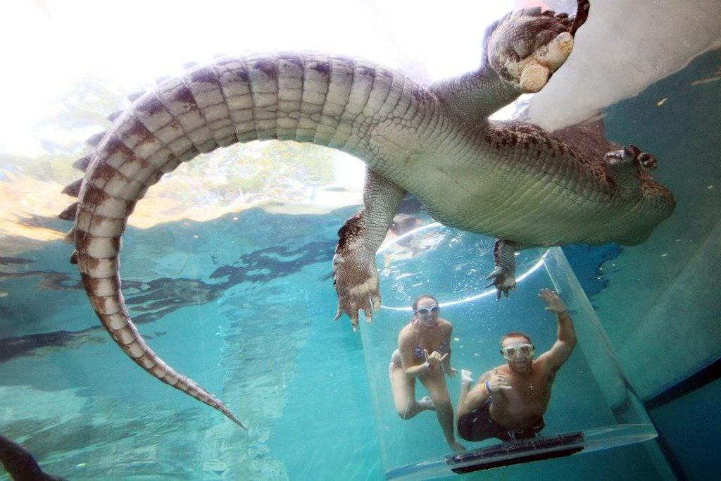 Source: crocosauruscove.com