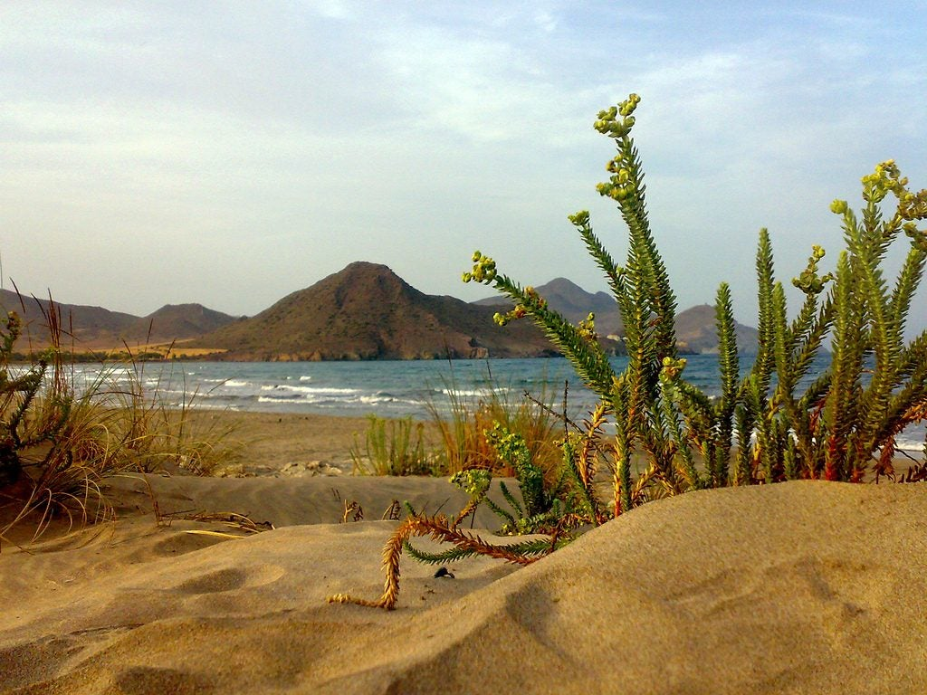 Playa Genoveses Espagne Opodo