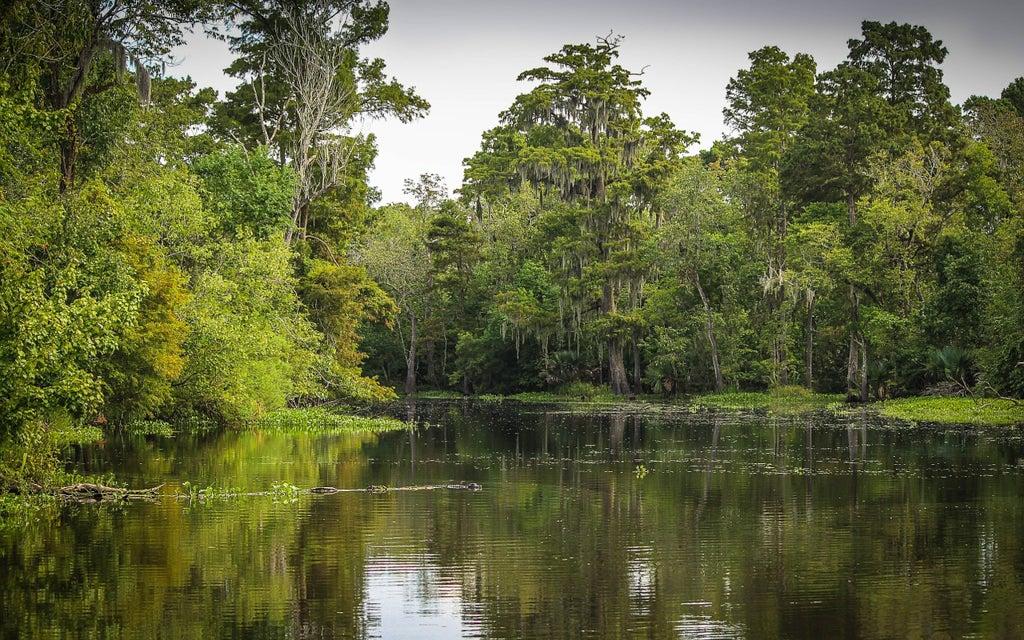 bayou-opodo