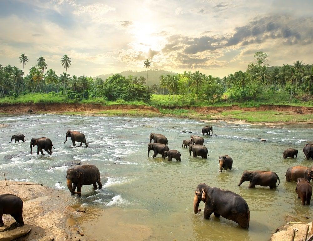éléphants sri lanka - blog Opodo