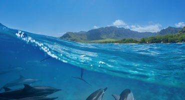Le Top 10 des îles de rêve dans le monde