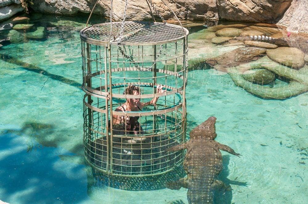 Crocodile cage Opodo