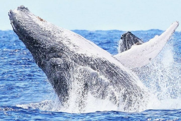 Balein à l'île Maurice - blog Opodo