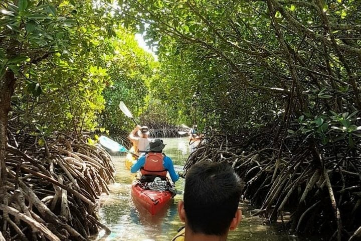 Kayak à travers les mangroves - blog Opodo
