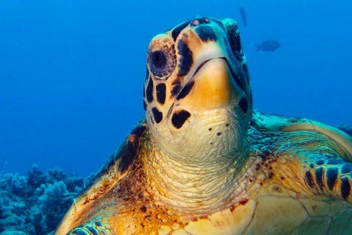 Plongée île Maurice - blog Opodo