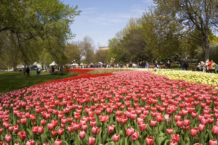 festival de tulipes Ottawa - Ontario
