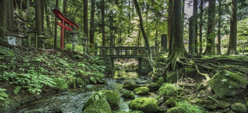 temple forêt hachinohe japon